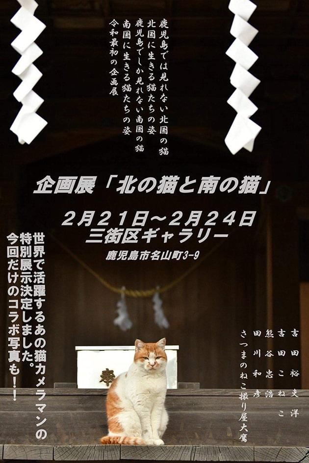 写真展『北の猫と南の猫』
